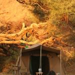2006 Octo_Manyara Camp & Ngo Agent Trip (20)