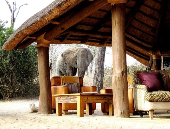 Explore The Tarangire With A Stay At Olivers!