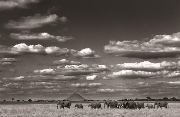 Elephants-Terengire-Robert-Koene-HR