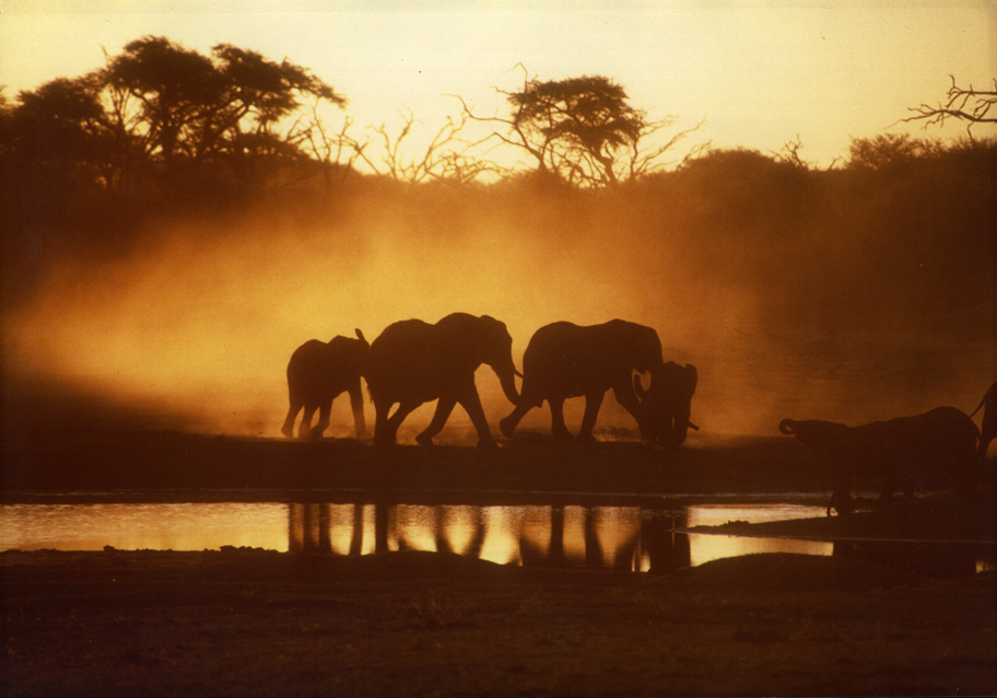 Hide eles at waterhole