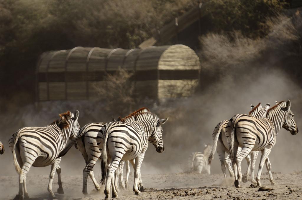 Boteti Experience At Leroo La Tau – Botswana Safari