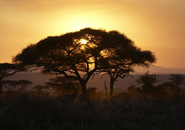 Oliver-s-Camp-Tarangire-Sunset-2