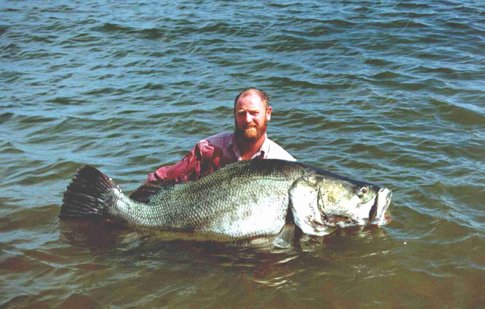 Discover uganda for White perch fish