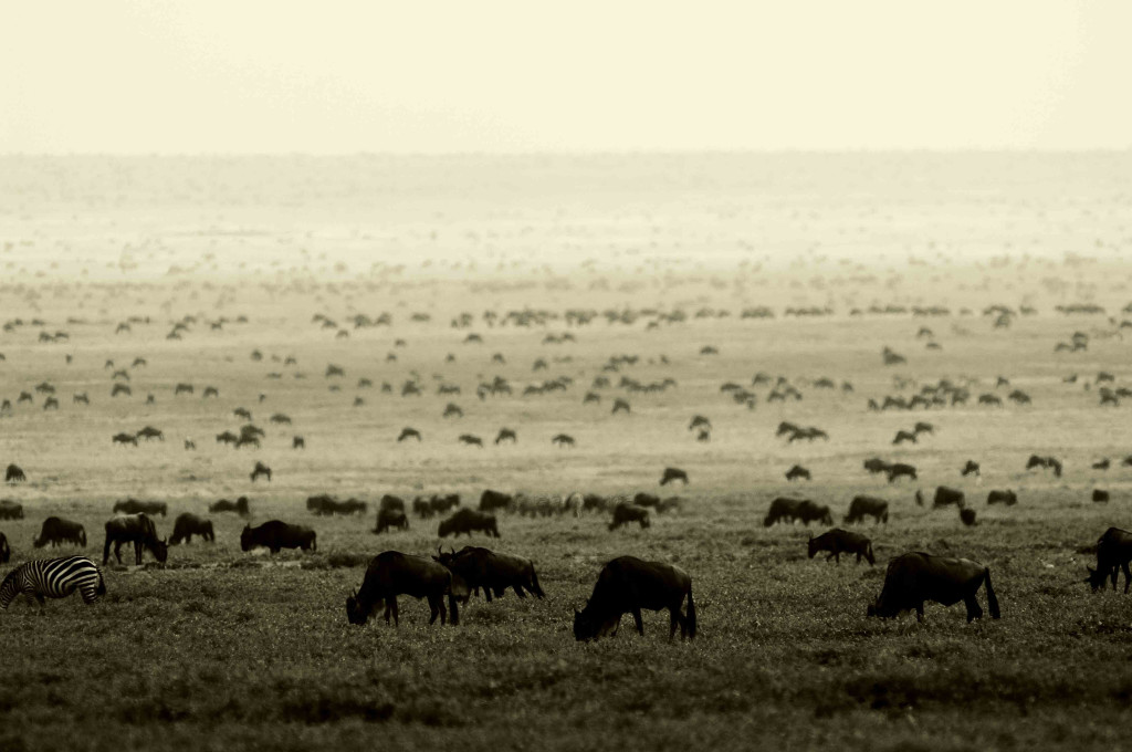 Explore East Africa – 15 Day Safari Itinerary
