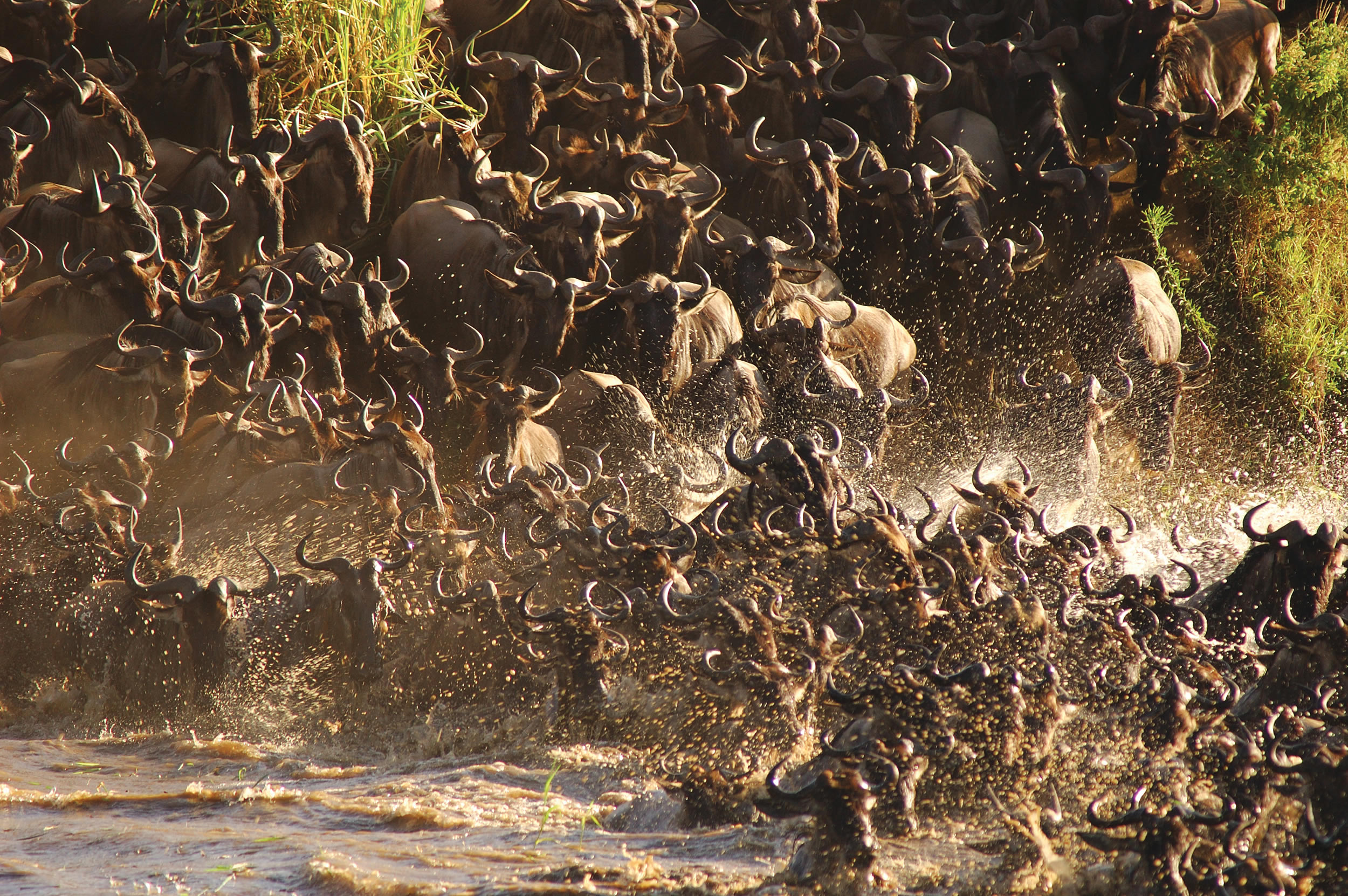 Magical Migration – Latest Updates Direct From The Serengeti!