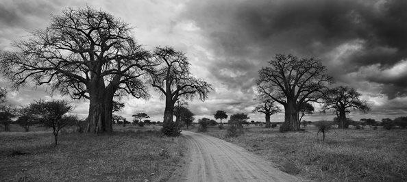 Tarangire-Baobab-Robert-Koene-014