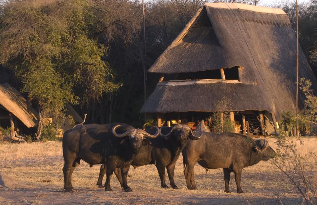 Zimbabwe, The Hide Safari Camp