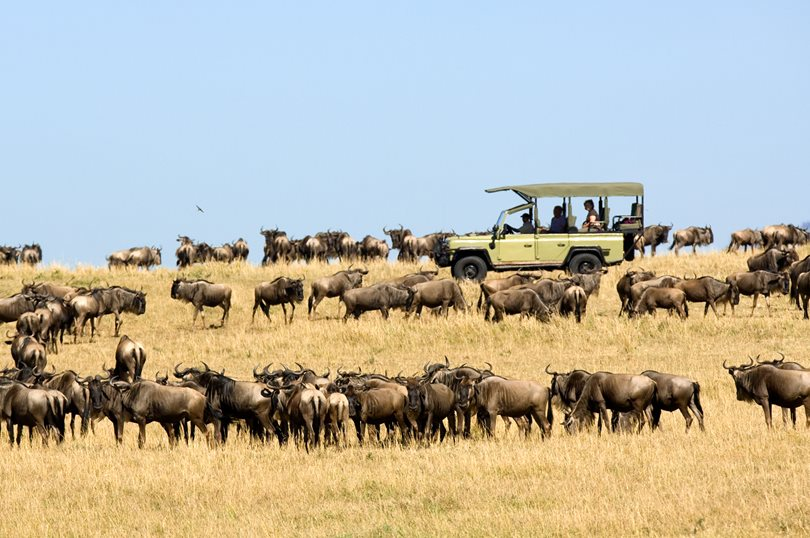 Ubuntu-Wildebeest-migration-game-drive-4