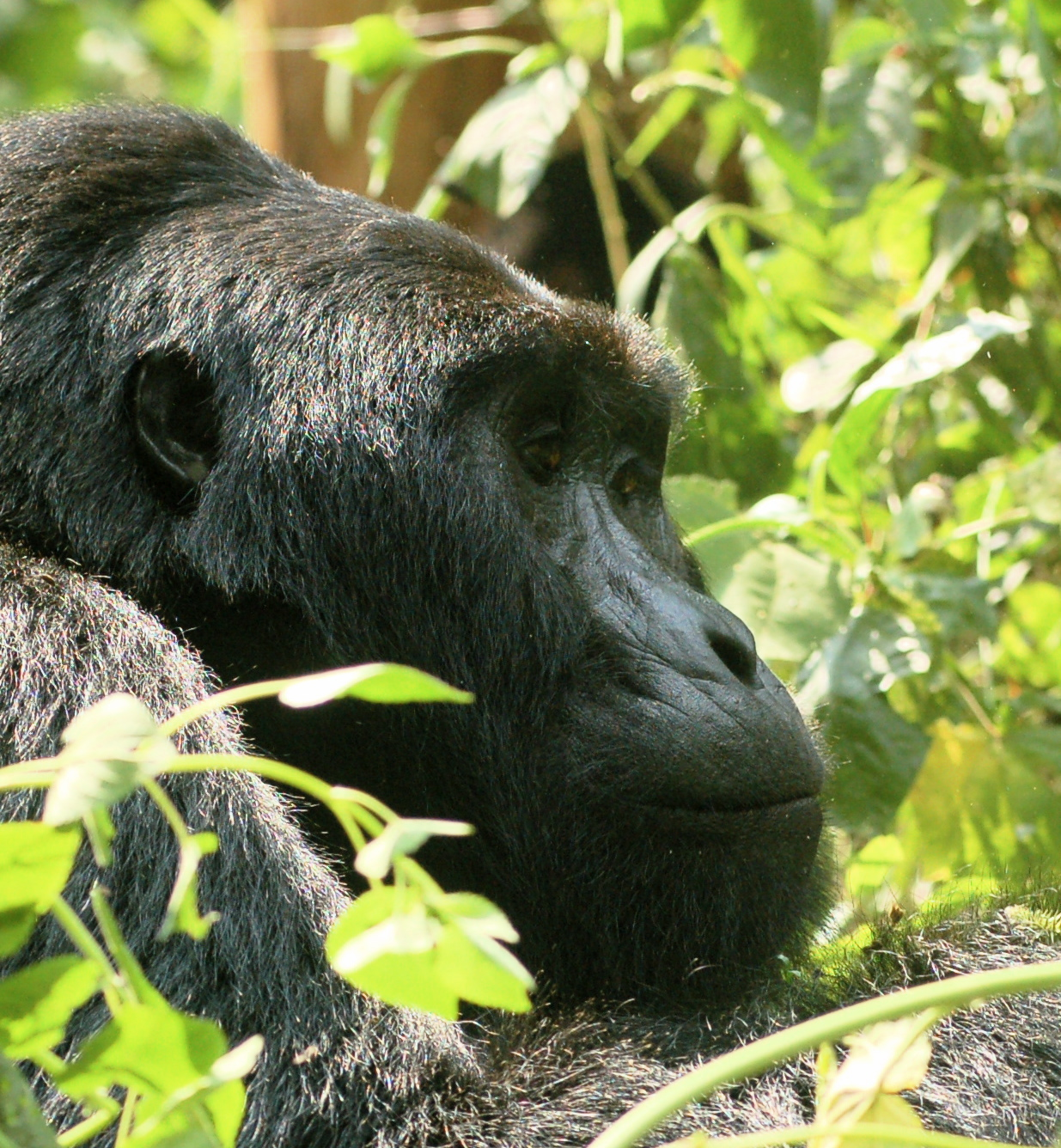 Gorillas In The Mist – Eco Tourism – Special Interest Safaris