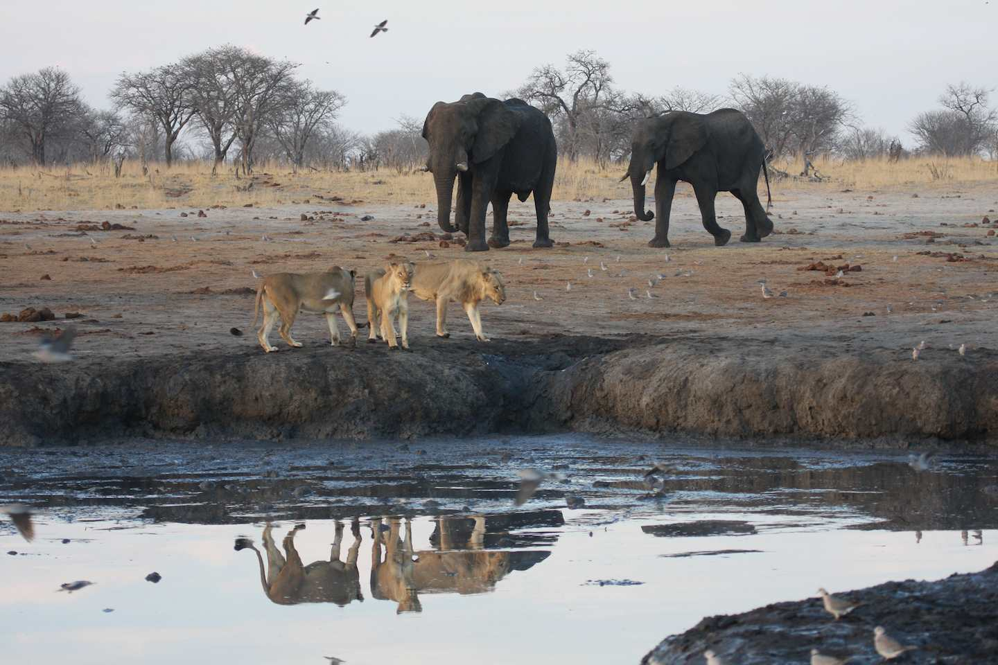 Hwange! A Great Game Reserve